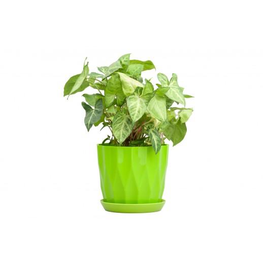 Кашпо для орхидей КАРАТ фисташковый 1,8 Л