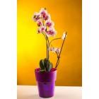 Кашпо для орхидей  КОЛО бронзовый 1,5 Л