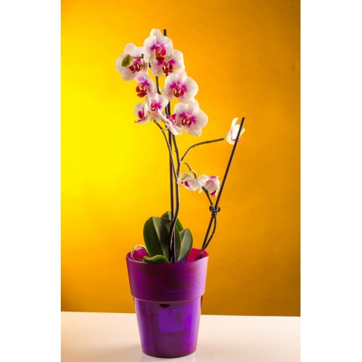 Кашпо для орхидей  КОЛО фиолетовый 1,5 Л